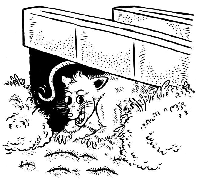 possum-bridge